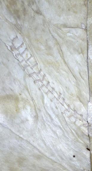 Original parchment repair